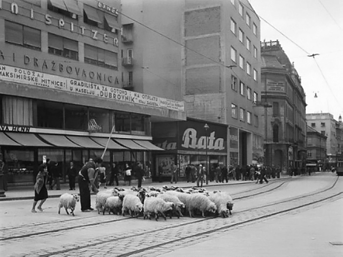 33_1938-_ban_Jelacic_Ilica_ovce